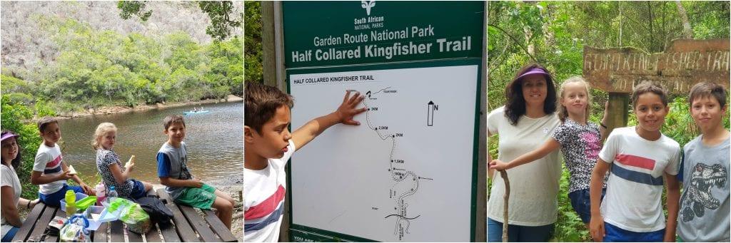 Half collared kingfisher trail