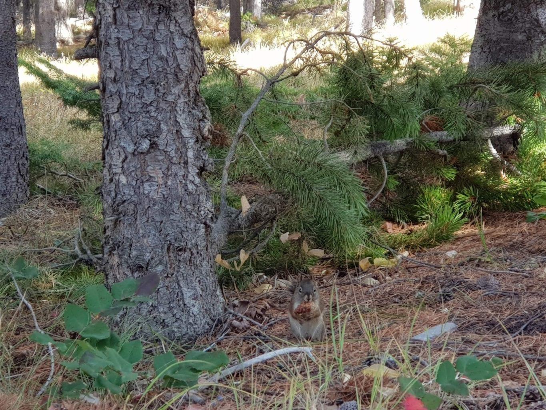 Photo-ready chipmunk at Grand Tetons National Park