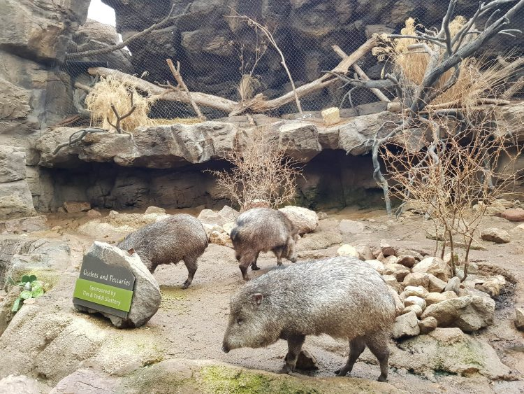 Family Travel Explore at Omaha's Henry Doorly Zoo