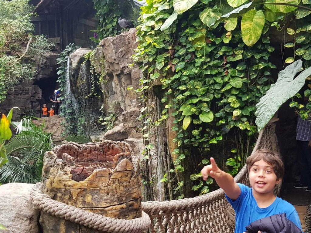Family Travel Explore at Omaha's Henry Doorly Zoo - Lied Jungle