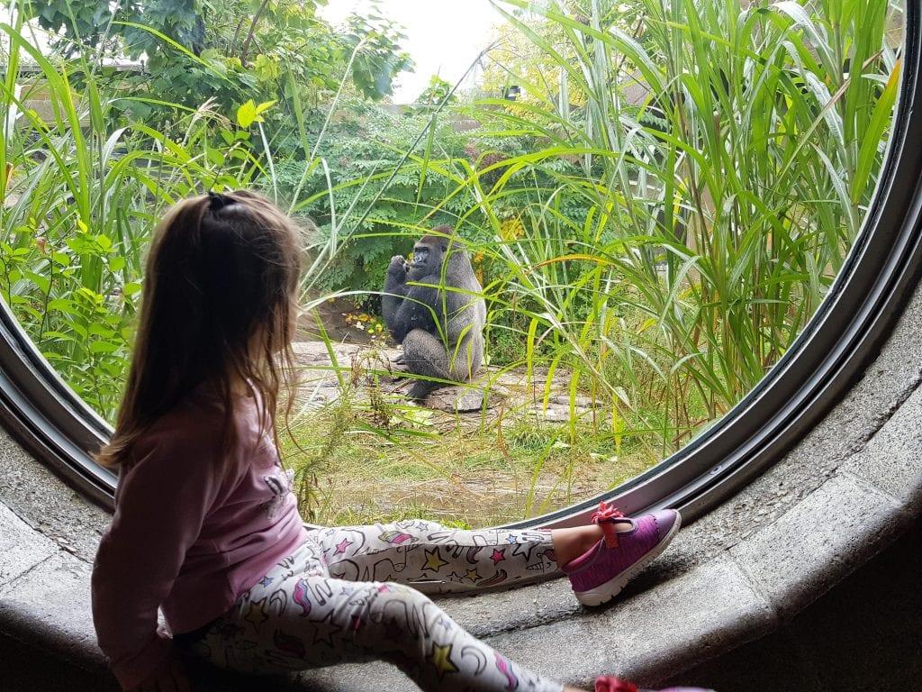 Family Travel Explore at Omaha's Henry Doorly Zoo